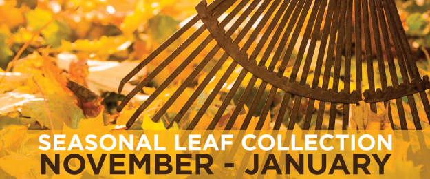 Seasonal Leaf Collection