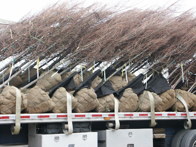 truck load of trees